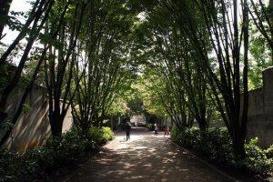 nansouty jardin